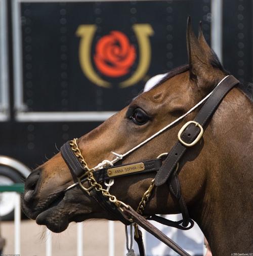 Derby Experiences Horse