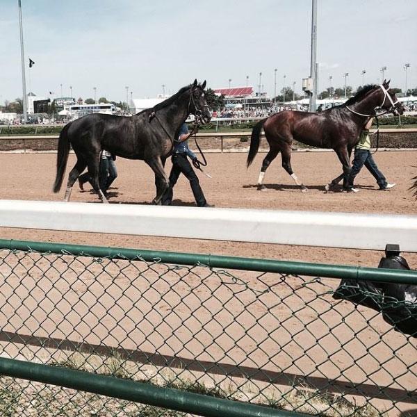 Horses at Kentucky Derby